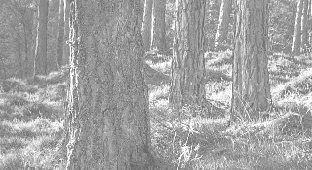 skogøkonomi_bw